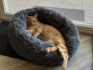 FluffyCAT pihe-puha ágy macskáknak photo review