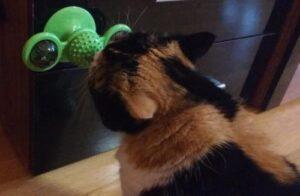 Interaktív szélkerék játék macskáknak photo review