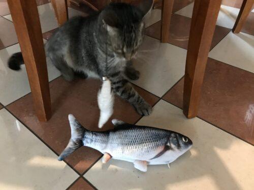 Dancing Fish mozgó játékhal macskáknak photo review
